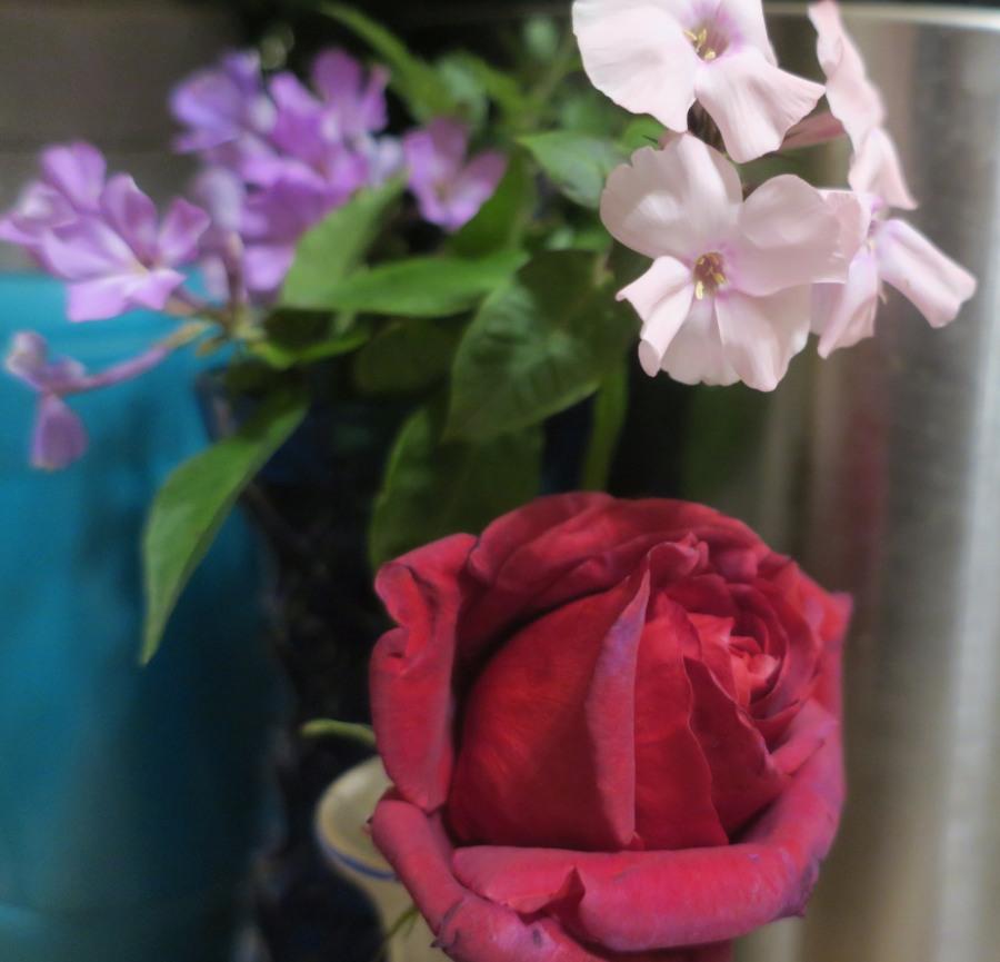 роза-флоксы
