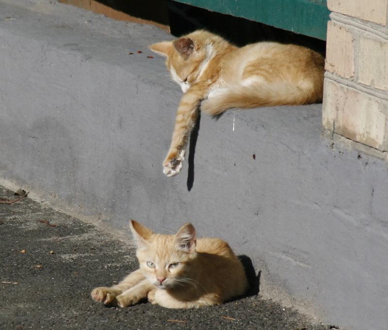 фото, коты, котята, Киев