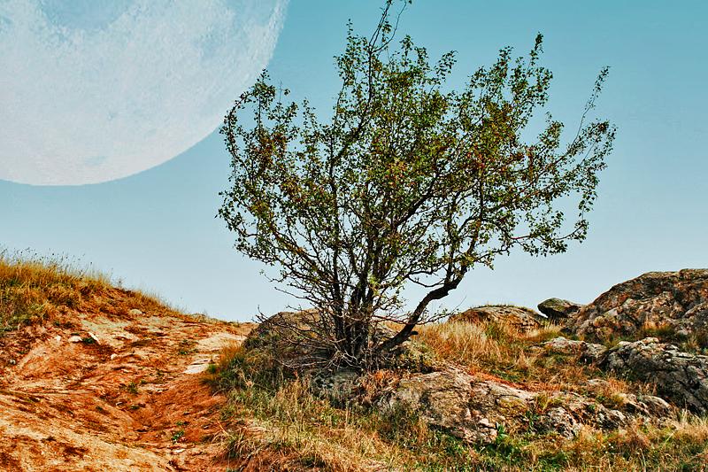 природа, дерево, дорога, фото