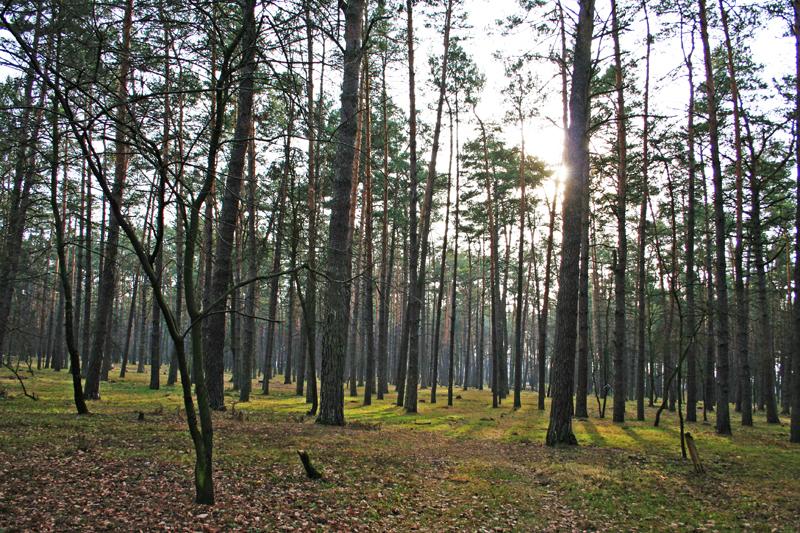 фото, лес, Киев
