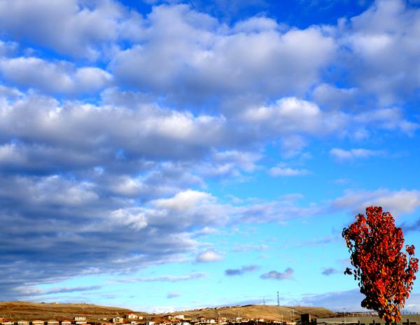 tree sky corner 600ph