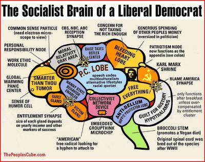 Sicialist Brain of Iiberal democrat