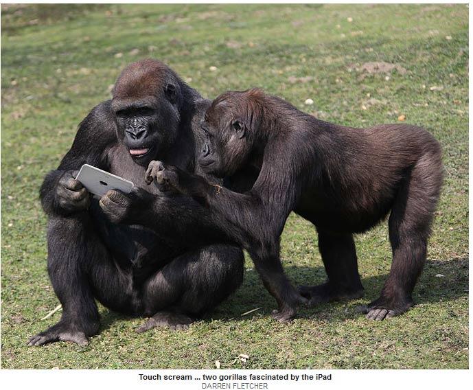 iPad monkey 3
