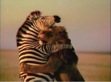 Lion_Zebra