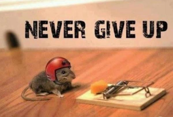 mouse_Never_Give_Up