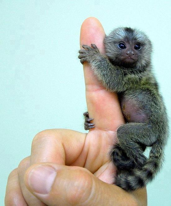 finger_size_monkey