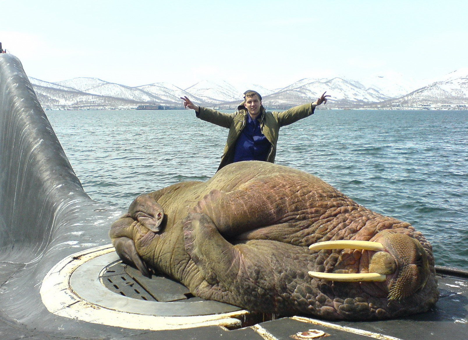 Walrus_Naps_on_Russian_Submarine_Hatch