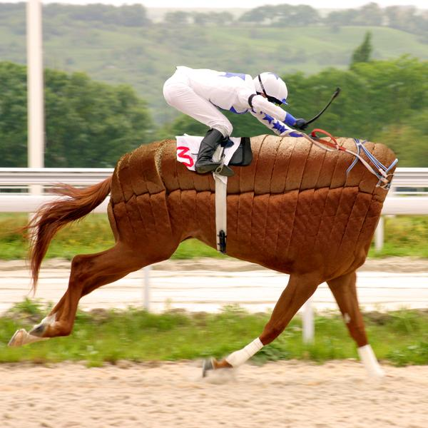 race horse without head