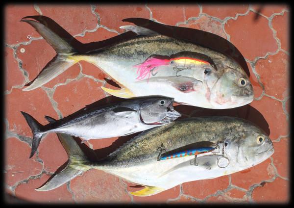 желтоперый каранкс. рыбалка в доминикане
