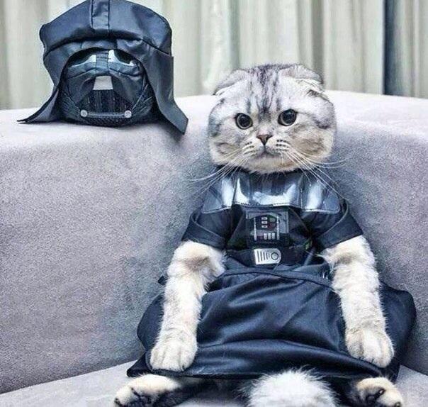 я твой котец