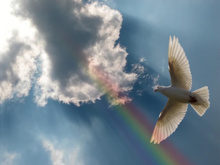 Свадебные голуби улетают на радугу
