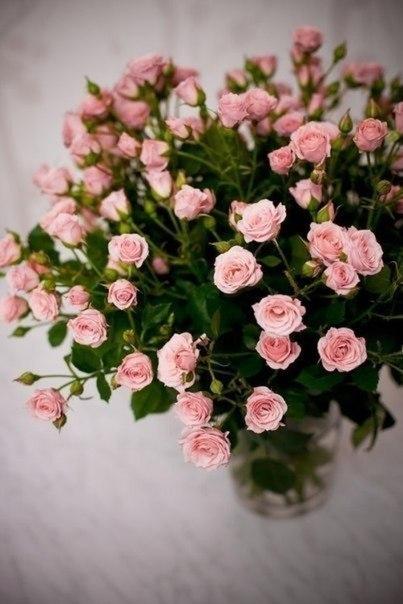 Картинки по запросу красивые цветы картинки