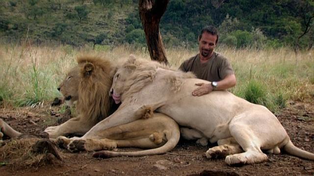 Кевин Ричардсон тискается с большими львами