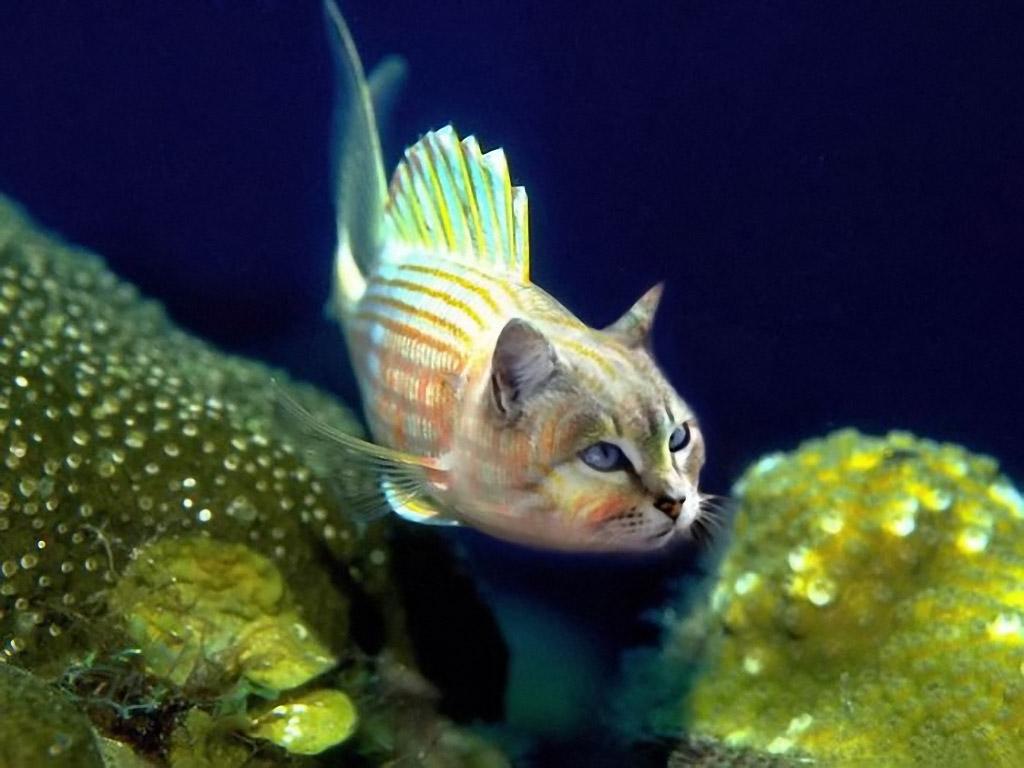 Смешные рыбы, картинки