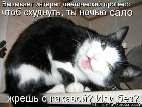 kotomatritsa_K