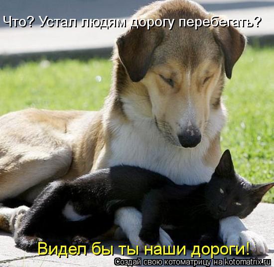 kotomatritsa_Zt
