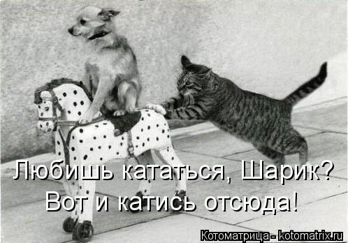 kotomatritsa_FK