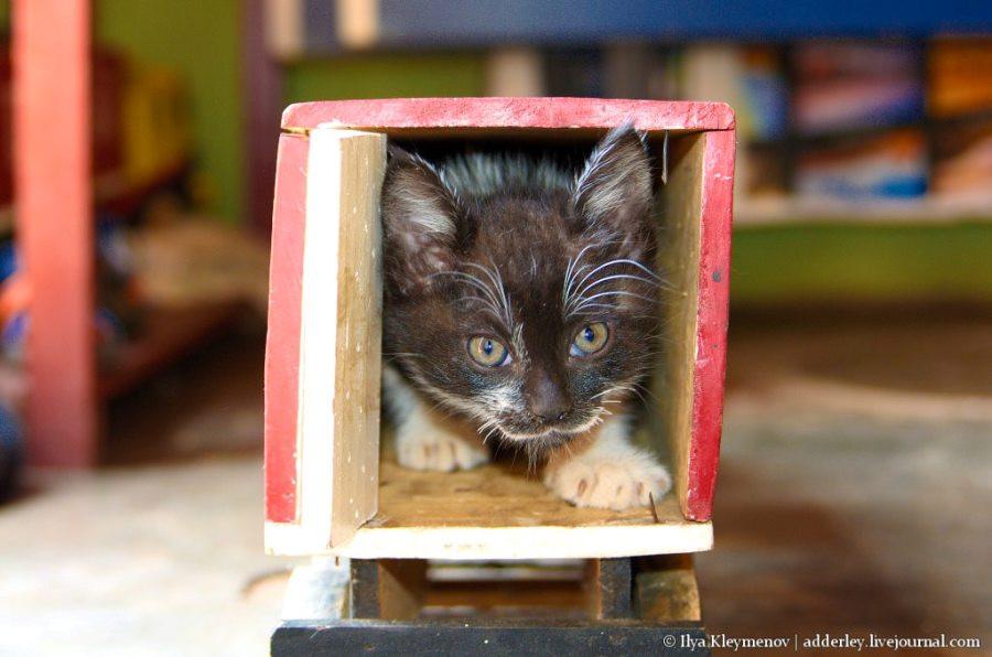 Коты мадагаскар