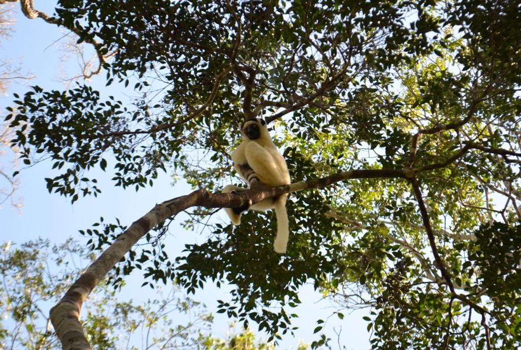 Мадагаскар, Национальный парк Киринди