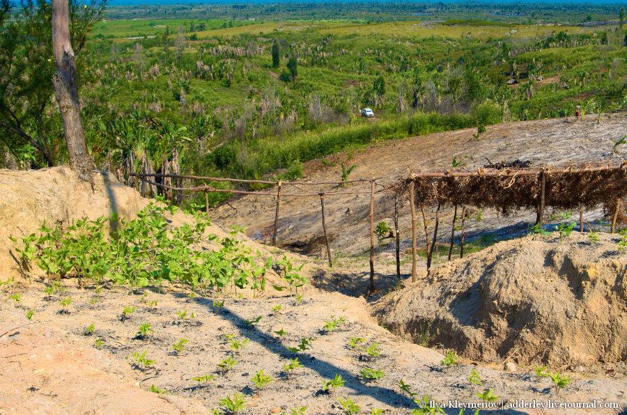 Дорога и просека. Защита плантации от пожаров