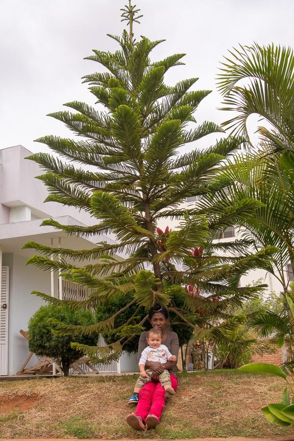 Про темпы роста и другие патологии Мадагаскара размеров, офигеть, дерева, конце, патологии, прилично, вполне, черри, зреет, наверное, расплодился, Отлично, Помидорсамосев, другие, откуда, расскажу, вставать, плантацию, увезти, выкопать