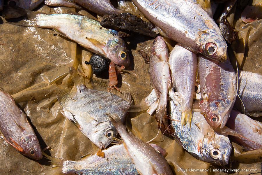 Мануру. Рыбные ряды Очень, сохранности, улова, свежего, Сортировка, Рыбасабля, какието, Грибы, сварили, Ездили, небольшого, вчерашние, Креветки, длину, Сантиметров, таракан, морской, вкусно, купил, тунца