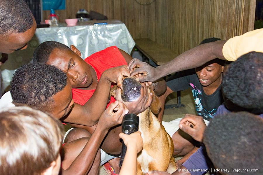 Собака vs мадагаскарский ёжик