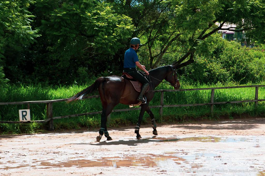 Пони тоже кони полчаса, лошади, опасны, правильно, отказывалась, обеих, сторон, вторые, Ванюша, посередине, неудобны, крайне, подходить, Ближе, проводится, ежегодный, Мадагаскаре, Оказывается, школа, чемпионат