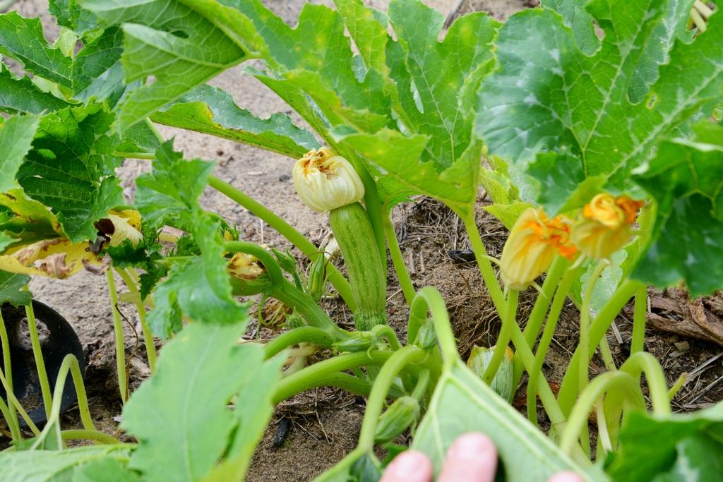 Огород в тропиках. Результат на сегодня