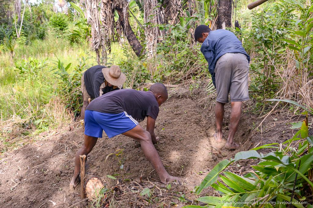 Операция Огород и аборигены