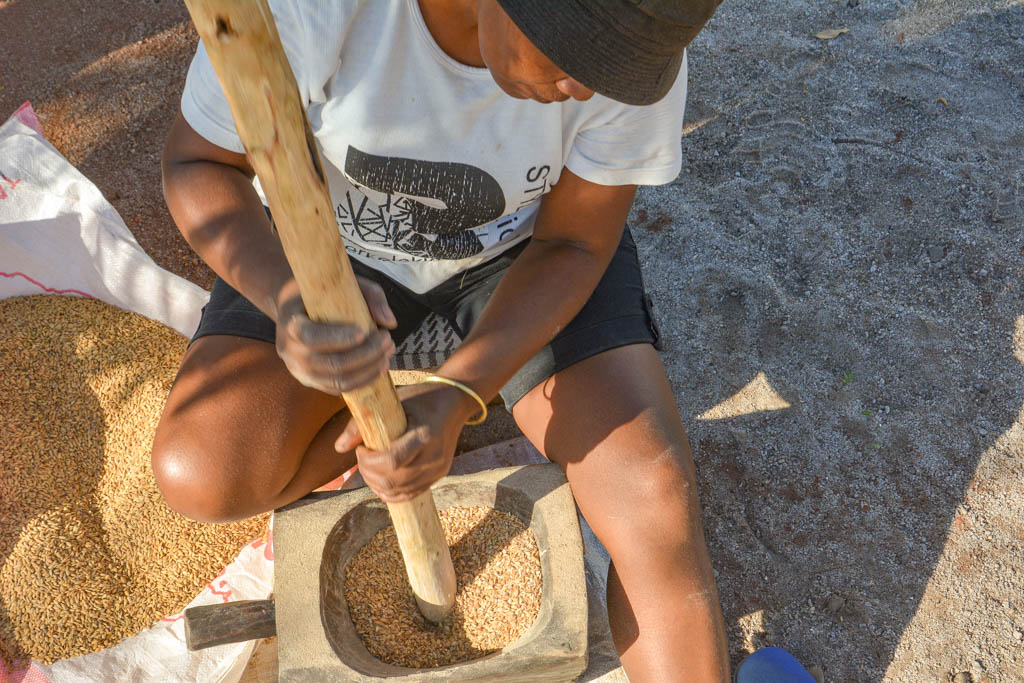 Уборка риса. Сервис по-малагасийски