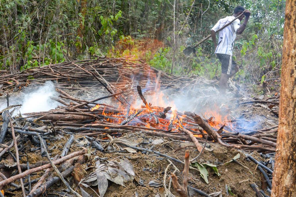 Саженцы гвоздики, борьба с аборигенами, эндемичные перепелки...