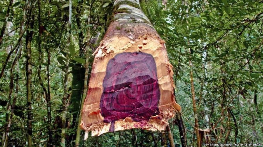 rosewood-tree_1024x1024.jpg
