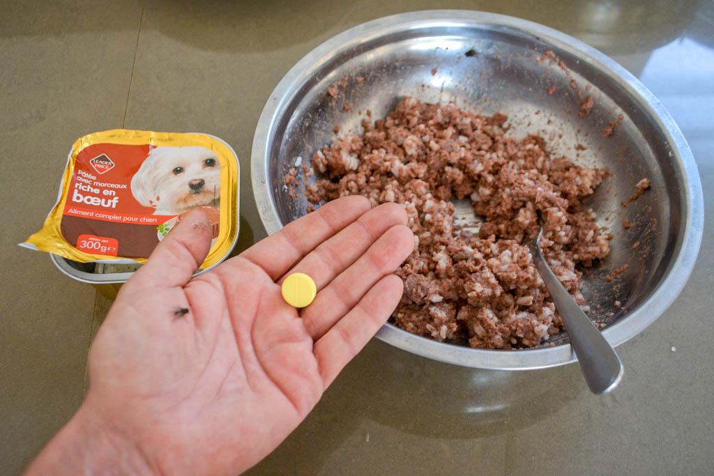 Сложности в выращивании щенков