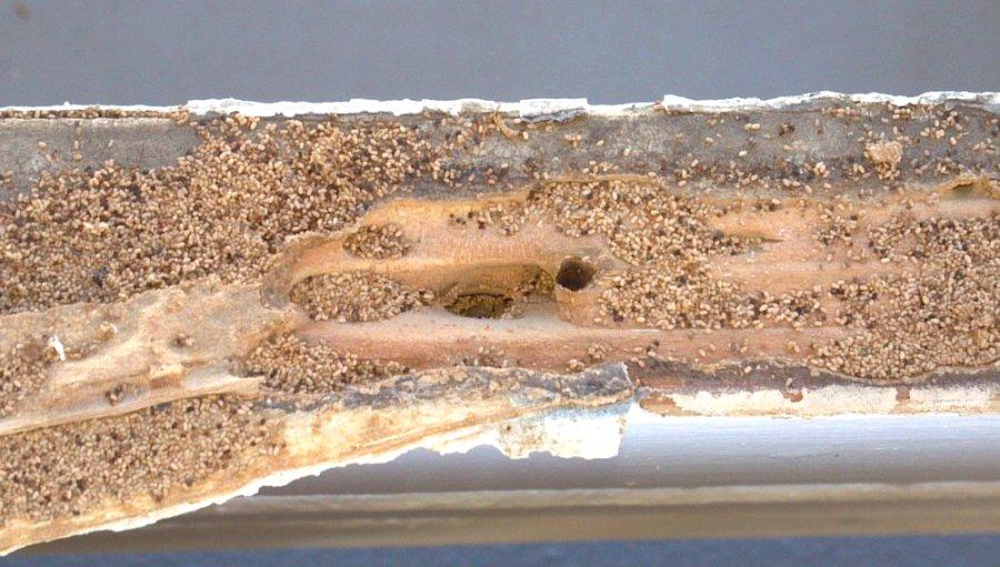 термиты2
