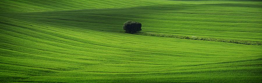 древо у поле-cr2