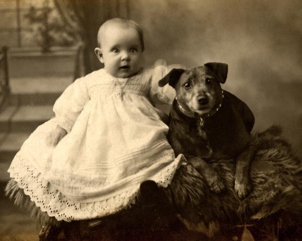 старинные картинки собак небольшого чайного магазинчика