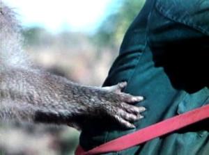 В тени Килиманджаро 1986.avi_snapshot_00.48.44_[2017.03.26_15.27.41]