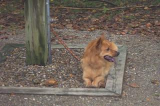 Sassy at McCormick's Creek