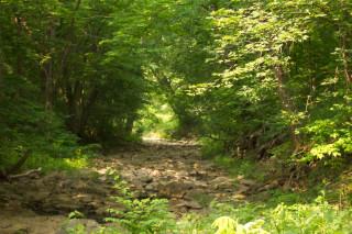 Stony creekbed