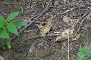 Violators will be Toad