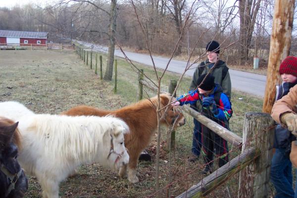 Hobbit ponies