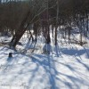 Creekbed with coverlet of snow