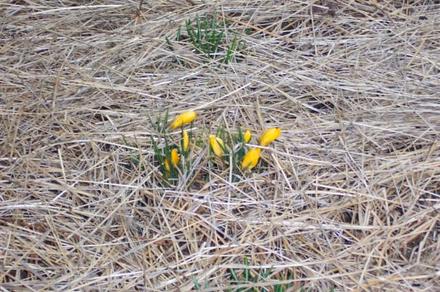 C'mon, spring!