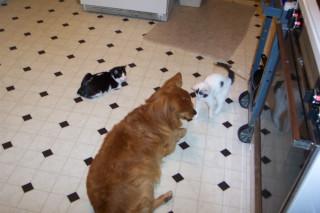 Underfoot in the kitchen