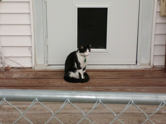 Hera on the back stoop