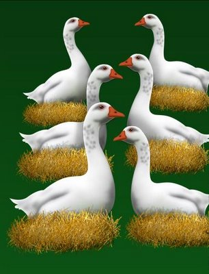 6-geese-a-laying