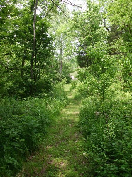 A bonny path