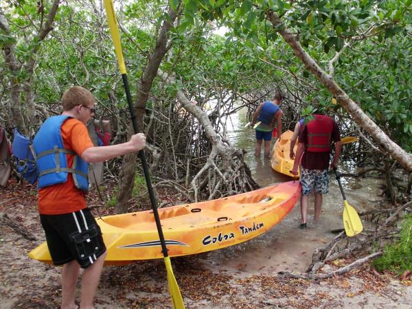 Into the Mangrove Maze