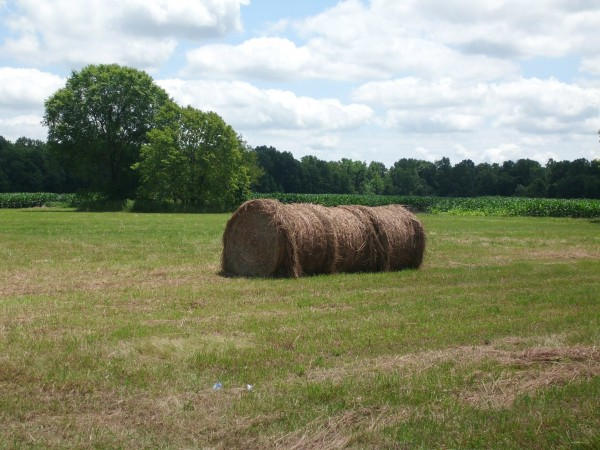 Hay, there